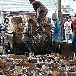 Bongkar muat hasil tambak di Gadukan Ikan Gresik